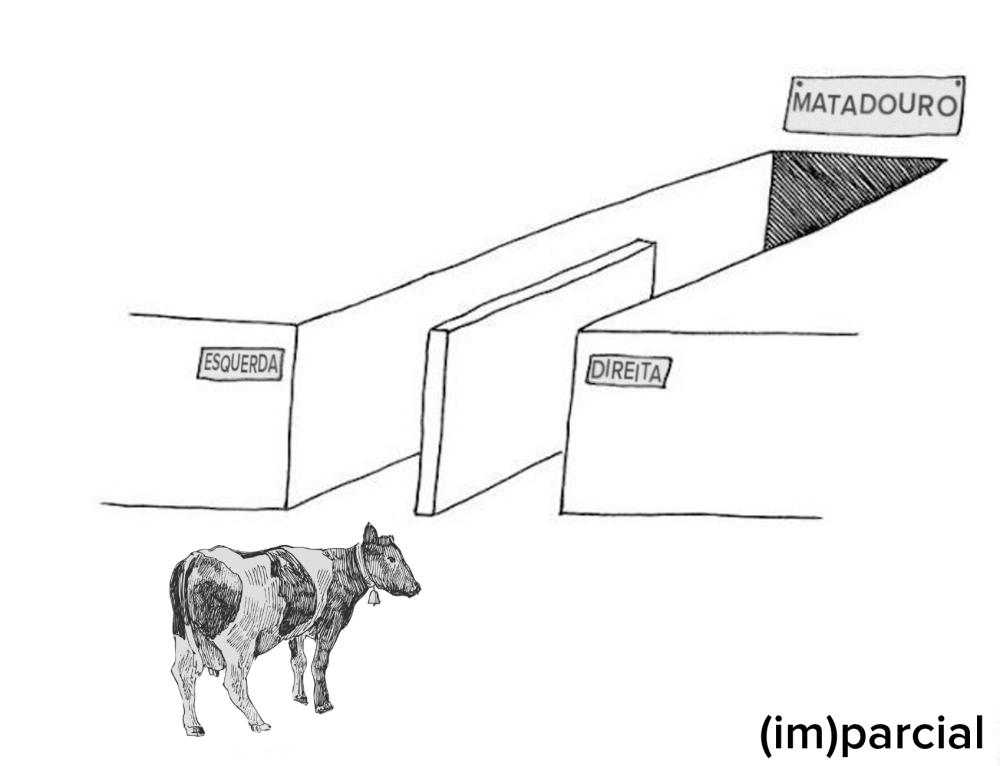 vaca impacial